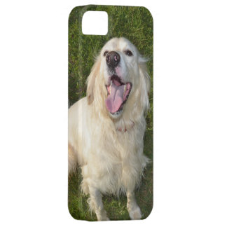 White Dog iPhone 5 Cover