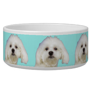 White dog Maltese Puppy