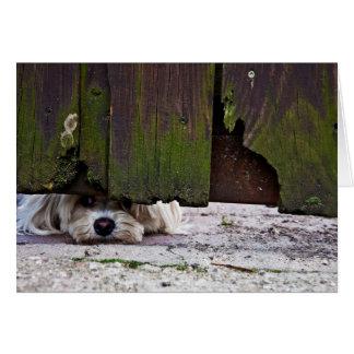 White Dog Peeking Under Fence Card