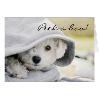 White dog wearing a hood of shirt card