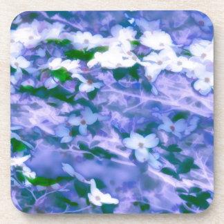 White Dogwood Blossom in Blue Coaster