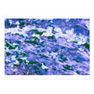 White Dogwood Blossom in Blue Postcard