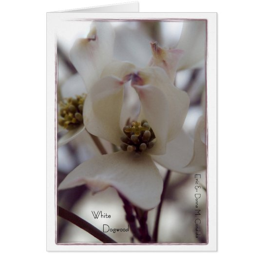 White Dogwood Card