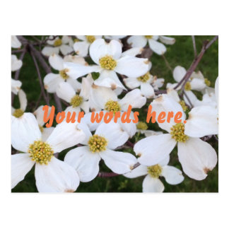 White Dogwood Flowers Your Words Postcards