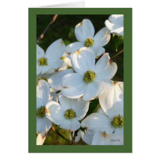 White Dogwood (Raw) Card