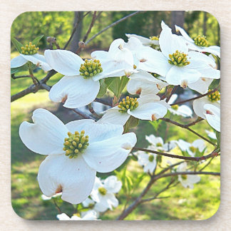 White Dogwood Tree Flower Drink Cork Coaster