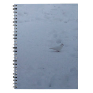 White dove on the snow in the woods notebook