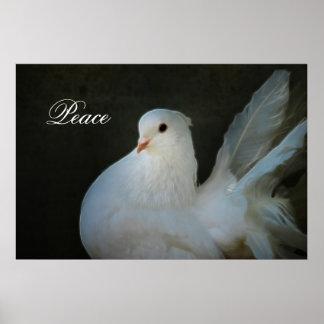 White dove peace symbol poster