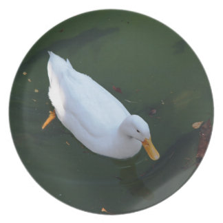 White duck plate