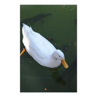 White duck stationery