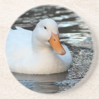 White Duck swimming in a creek Coaster