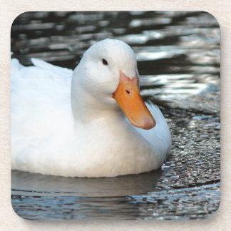 White Duck swimming in a creek Coaster
