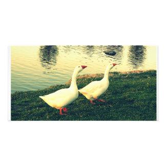 white ducks - couple in love customized photo card