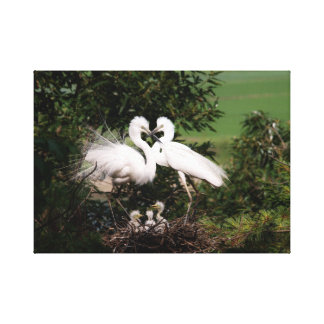 "White Egret Family 18.33"" x 13.00"" Canvas Print"