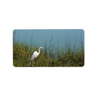 White egret standing in grass w water