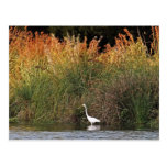White Egret with Colourful Grasses
