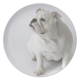 White English Bulldog Plate
