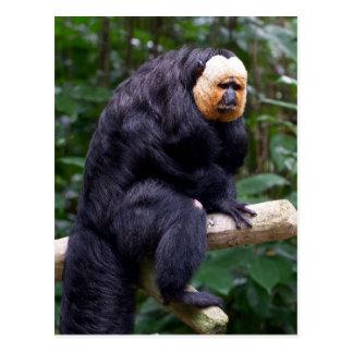 White Faced Saki Monkey Postcard
