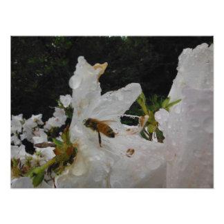 white flower bee rain water photo print
