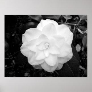 White Flower. (Black and White) Poster