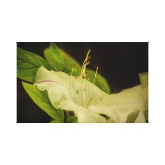 White flower in the darkness canvas print