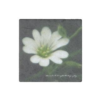 White flower Magnet Stone Magnets