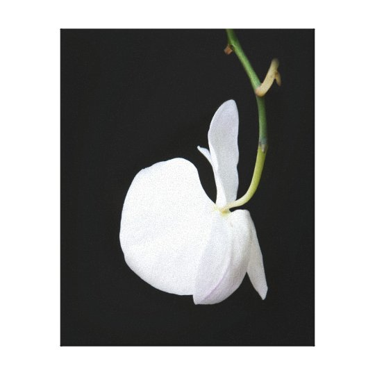 White Flower on Black Wrapped Canvas