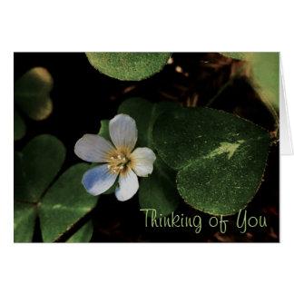 White Flower postcard