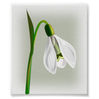 White Flower with Long Green stem Poster