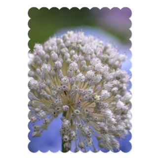 White Flowering Allium Card