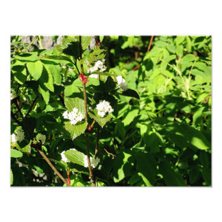 White flowers and Green Leaves Photo Print