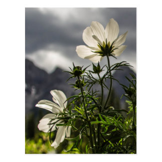 White flowers and mountains postcard