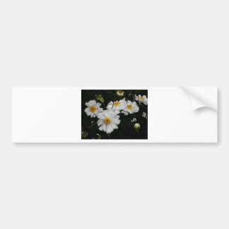 white flowers bumper sticker