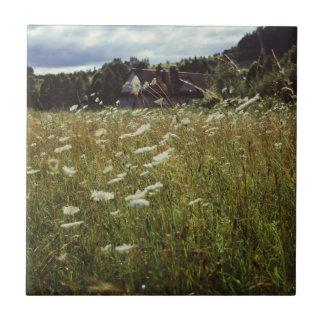 White Flowers Field Summer Evening Photo Tile