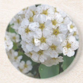 White flowers glowing drink coaster