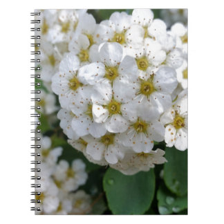 White flowers glowing notebooks