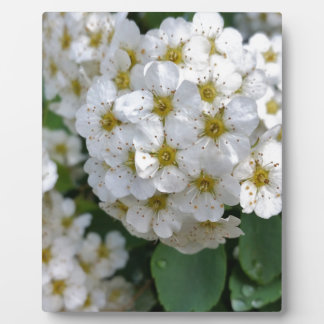 White flowers glowing plaque