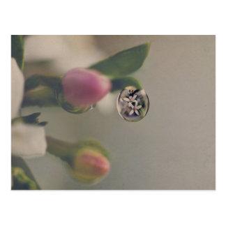White flowers in water drop postcard