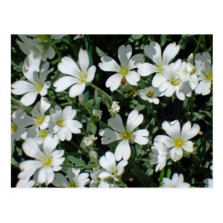 White Flowers on a Bright Day Postcard