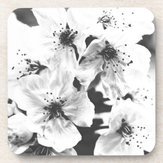 white flowers on the branches in spring coaster