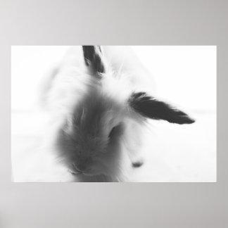 White fluffy rabbit poster