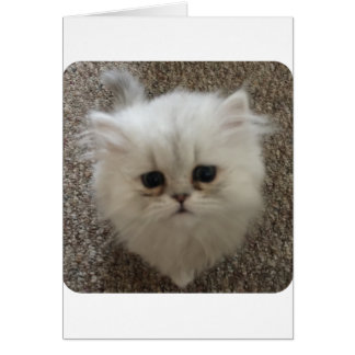 White Fluffy the kitty with sad eyes Card