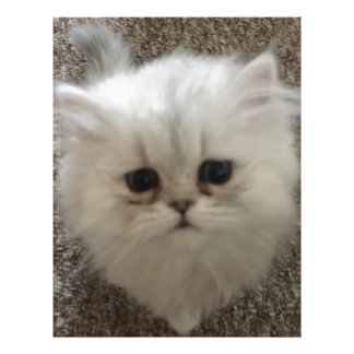White Fluffy the kitty with sad eyes Letterhead
