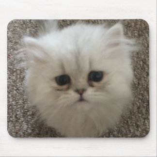 White Fluffy the kitty with sad eyes Mouse Pad