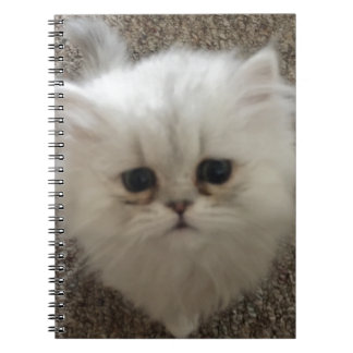 White Fluffy the kitty with sad eyes Notebooks