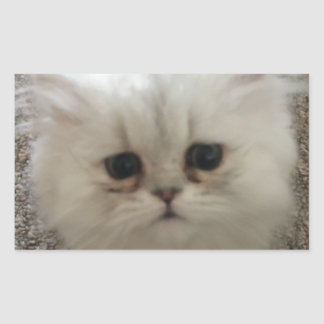 White Fluffy the kitty with sad eyes Sticker