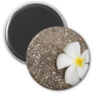 White Frangipani flower on rock surface Magnet
