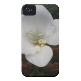 White Fresia Flower iPhone 4 Cover
