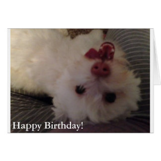 White, Funny Puppy Happy Birthday card