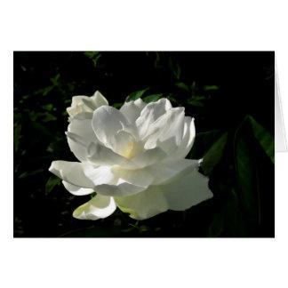 White Gardenia Blossom Note Card